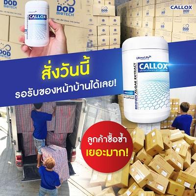 Callox pantip